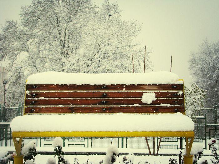 Park Bench Enjoying Life Winter Snow
