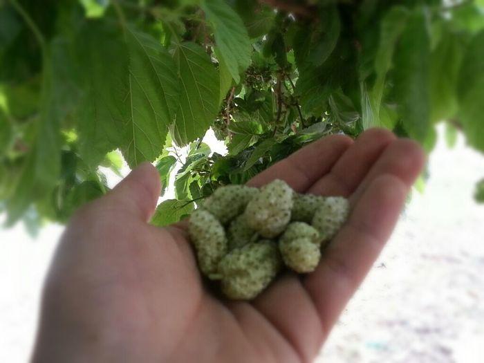 Deya ( Taking Photos Enjoying Life Mulberry Tree Have A Nice Day! )