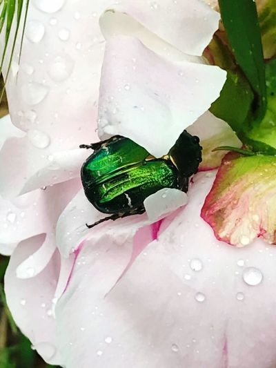 Life in the garden 🤗 Insect Day Close-up One Animal Flower Plant No People Beauty In Nature Nature