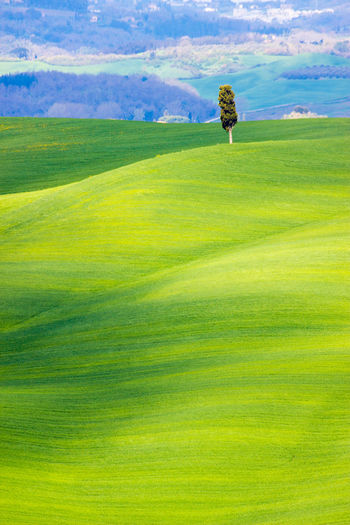 Grass Green Color Plant Landscape Environment Nature Sky Land Beauty In Nature Scenics - Nature Day Tranquil Scene Tranquility Field Cloud - Sky No People Leisure Activity Activity Golf Course Golf Outdoors