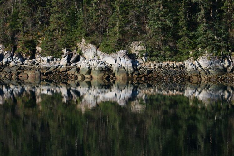 Water Reflection Plant Tree No People Nature Day Waterfront Grass Outdoors Land Drinking Skagway Alaska Nahku_Bay Rocky Shoreline Ocean Inlet Inlet Serene Serene Outdoors Early Morning