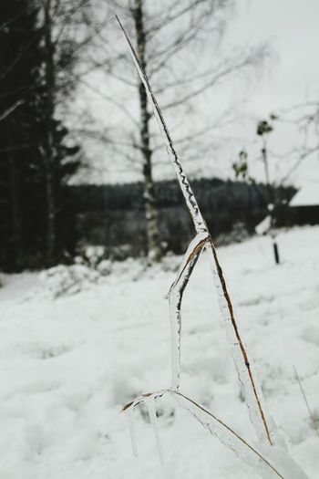 Learn & Shoot: Simplicity Frozen Taking Photos Check This Out Hello World Nature Snow Cold Winter