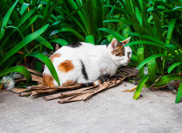 Beautiful stray calico cat living in a park. Green Color Animal Animal Themes Calico Cat Cat Domestic Domestic Animals Domestic Cat Feline Leaf Mammal Nature No People One Animal Outdoors Park Pets Plant Plant Part Relaxation Resting Stray Stray Cat