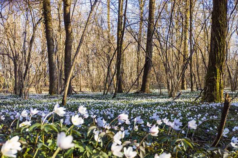 View of flowering plants on snow covered land