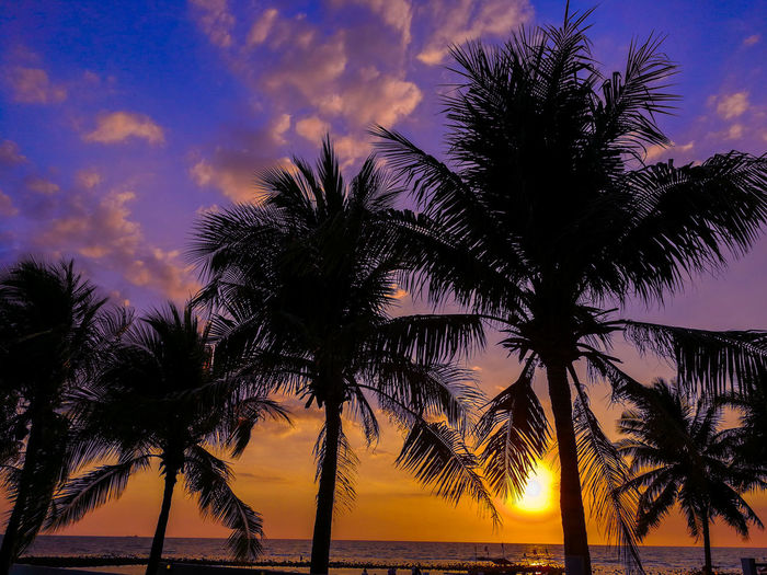 sunset and pines Sky Sunset Tree Cloud - Sky Beauty In Nature Tranquility Water Plant Scenics - Nature Tranquil Scene Tropical Climate Beach Idyllic Land Outdoors Nature Sea Palm Tree No People Silhouette