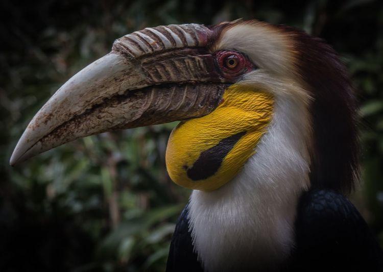 Bird Photography Bird Hornbill Zoo Animals  Showcase April