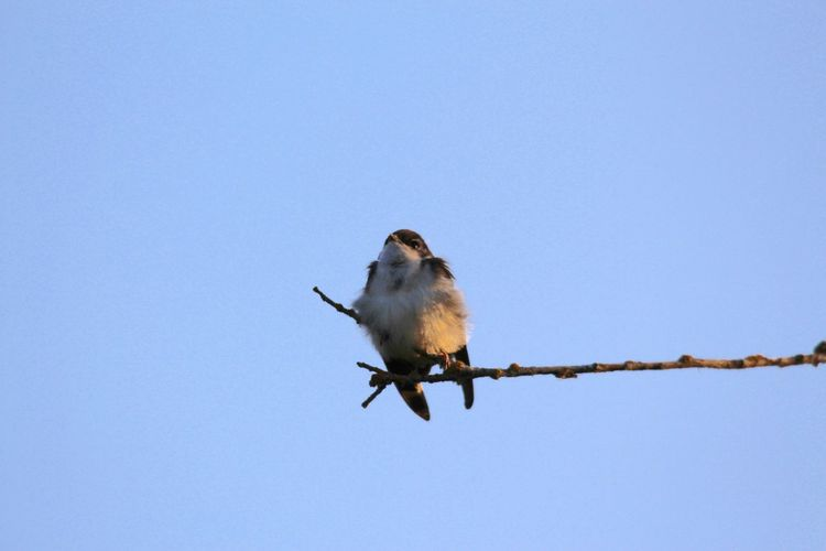 Low angle view of bird perching on the sky