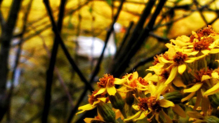 Alone... Flower