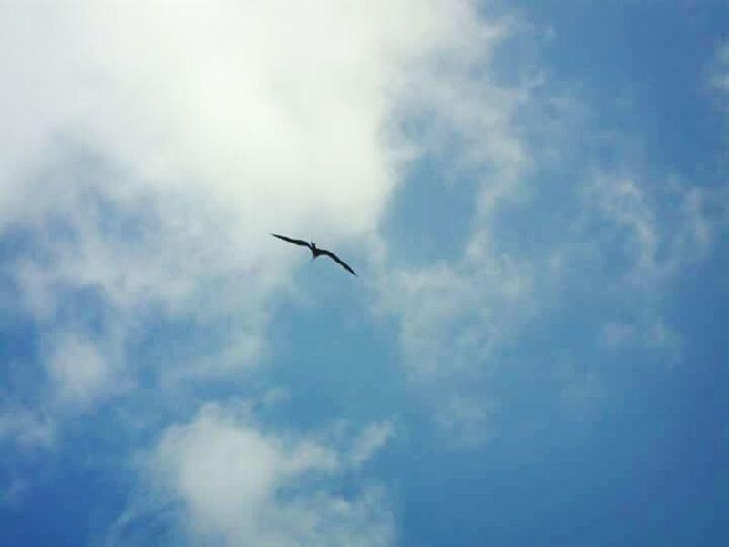 Flying Sky Day Bird Nature Airplane One Animal Animal Themes