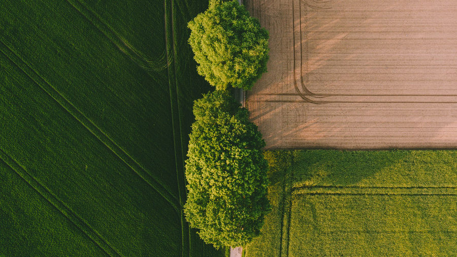 Two big green trees between a brown yellow field and a green field. Drone shot Bird - Perspective with rich colors. Green Color Plant Growth No People Nature Landscape Beauty In Nature Land Day Agriculture Tree Rural Scene Outdoors Field Grass Tranquility Tranquil Scene Environment Green Scenics - Nature Hedge Plantation Drone  Eyemphotography Drone Shot Drone Photography
