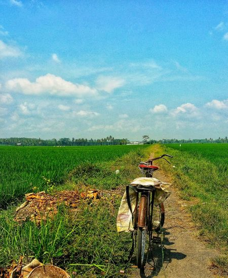 Water Cereal Plant Rural Scene Working Agriculture Field Crop  Farm Sky Cloud - Sky Agricultural Field Rice Paddy Combine Harvester Asian Style Conical Hat Agricultural Equipment Terraced Field Cultivated Land Plantation