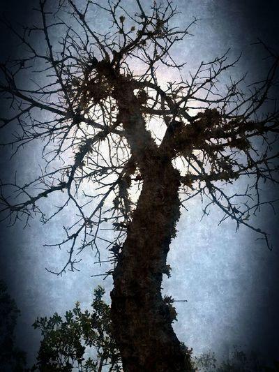 Tree Art Tree Texture Sun With A Tree a