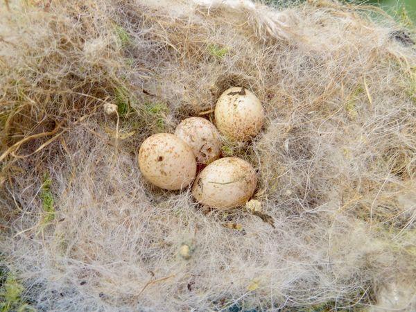 Abandoned Bird Nest Bird Eggs Bird Nest Close-up High Angle View Nest Box No People