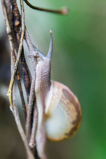 Close-up of snail on dry plant