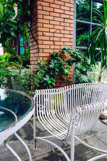 Empty chair against plants in yard