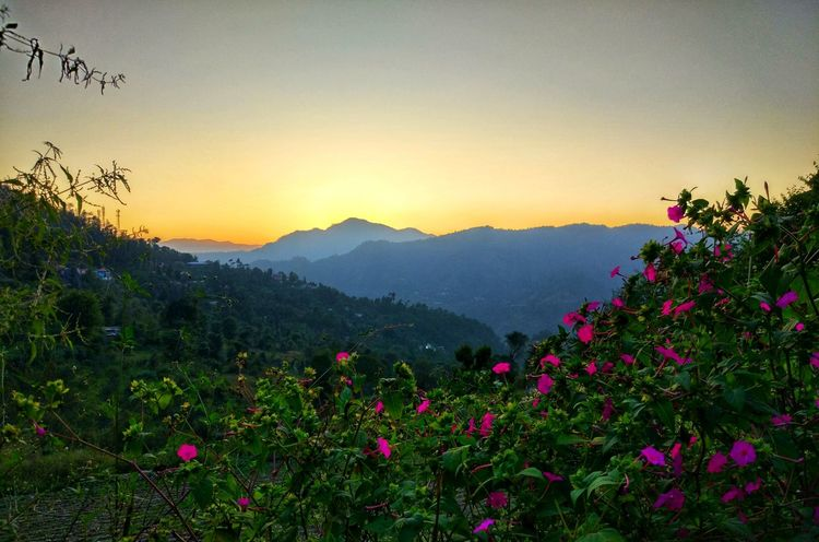 EyeEmNewHere Flower Sunset Nature Beauty In Nature Mountain Scenics No People Landscape Outdoors Flower Head Freshness Tree Sky Plant Summer Travel Destinations Dawn Travelling Photography Vagabond Vscocam Photoshoot Naturelovers