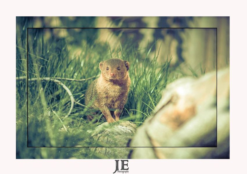 One Animal Animal Themes Mammal No People Animals In The Wild Sitting Full Length Day Nature Portrait Outdoors Close-up