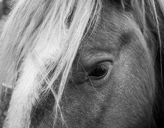 Pony 1 Black & White Walking Around Pony Horses