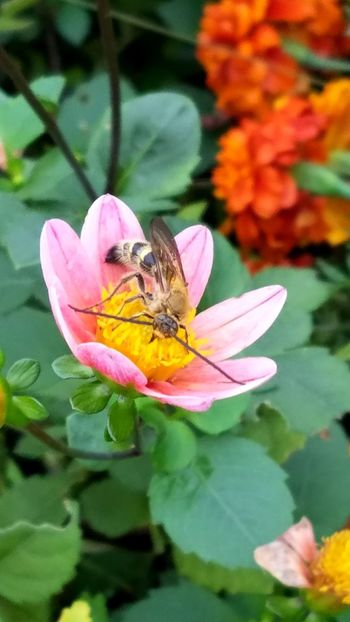Flowers Beauty Tokyo Flower Photography Autumn Iloveflowers Beauty In Nature Flowerslovers Plant 東京 植物 花 秋 Close-up Pink Color Leaf Nature Bee 蜂