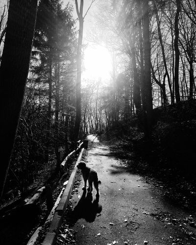Dog in forest against sky