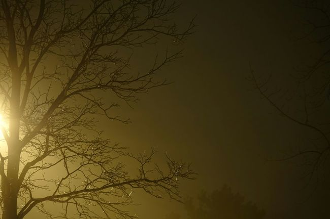 Fog Foggy Morning Night Trees Night Lights Relaxing EyeEm Nature Lover EyeEm Best Shots Eye4photography  Silhouette
