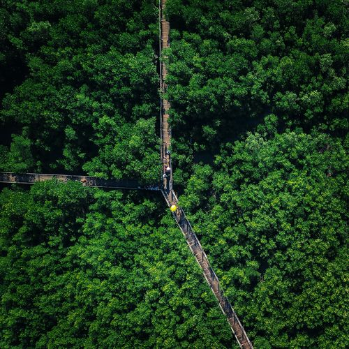 High angle view of trees and plants in forest