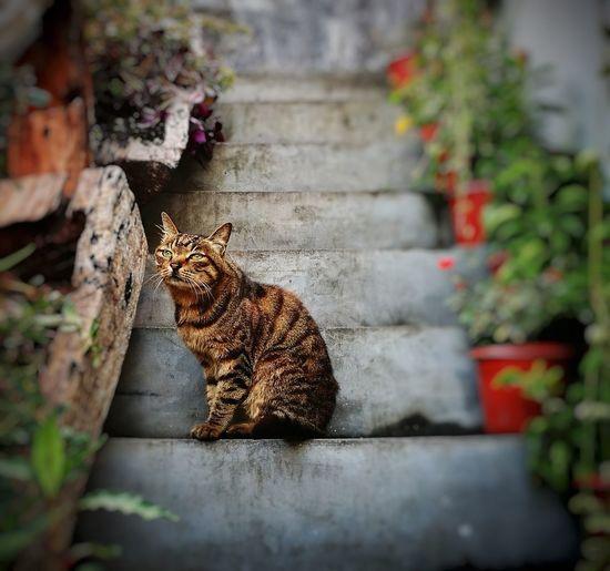 Street Cat Cat Sitting Mammal Animal Themes Outdoors Homeless Homeless Cats Melancholy Cat Melancholy Animal