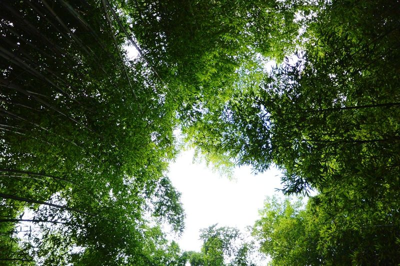 Petite pause dans cette forêt de bambous View From Below Bamboo Forest La Bambouseraie Anduze Holiday Memories South France