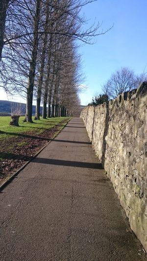 Narrow pathway along trees