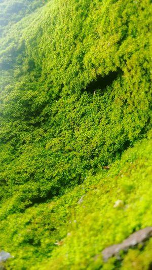Mountain Natural Green  Green Carpet Greensteps Steps Green Fungus My Best Shot