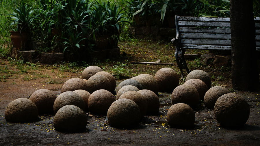 Rounded stones No People Large Group Of Objects Outdoors Day Nature Freshness Sony Sony Alpha A6000 Sony Alpha APS-C Sony A6000 No Filter, No Edit, Just Photography Qutub Shahi Tombs Hyderabad Monuments Stones And Plants