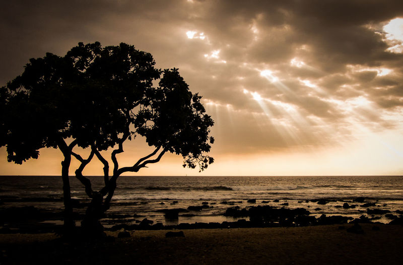EyeEmNewHere Sky Water Sea Tree Beauty In Nature Cloud - Sky Horizon Land Nature Tranquility Beach Scenics - Nature Horizon Over Water Tranquil Scene Sunset Plant Silhouette Environment Outdoors No People Hawaii Travel