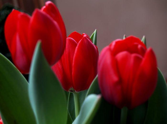 Elegant red