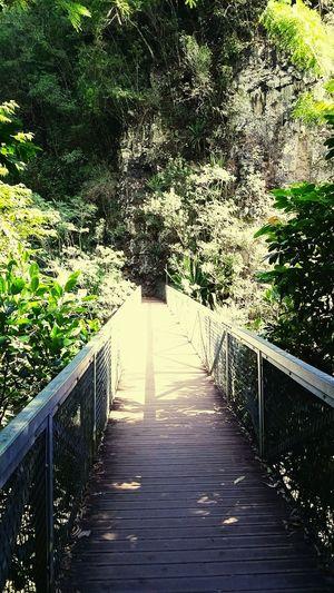 Passerelle vers l'Entre-Deux Trail Running Reunion Island EyeEmNewHere Sentier Trees Mountain River Bridge Liane Tree Water Footbridge Sunlight Railing Sky Boardwalk