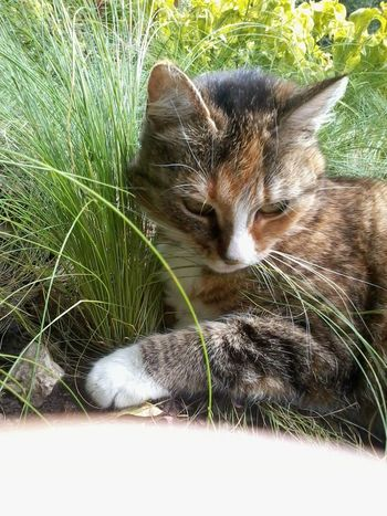 Archive 2014 Made Not Even With Iphone No Effects One Animal Animal Themes Mammal Animal Cat Feline Domestic Cat Pets Domestic Domestic Animals No People Relaxation Plant Whisker Nature Grass Day Close-up Sunlight