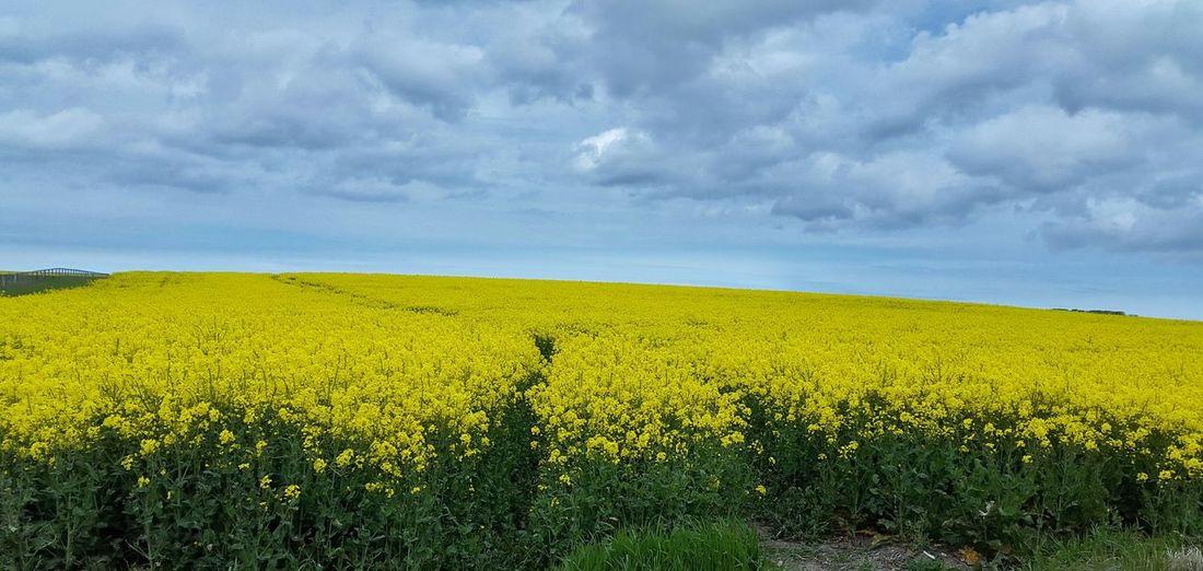 Taking Photos Snapseed Editing  Enjoying Life Yellow Flower Spring Yellow