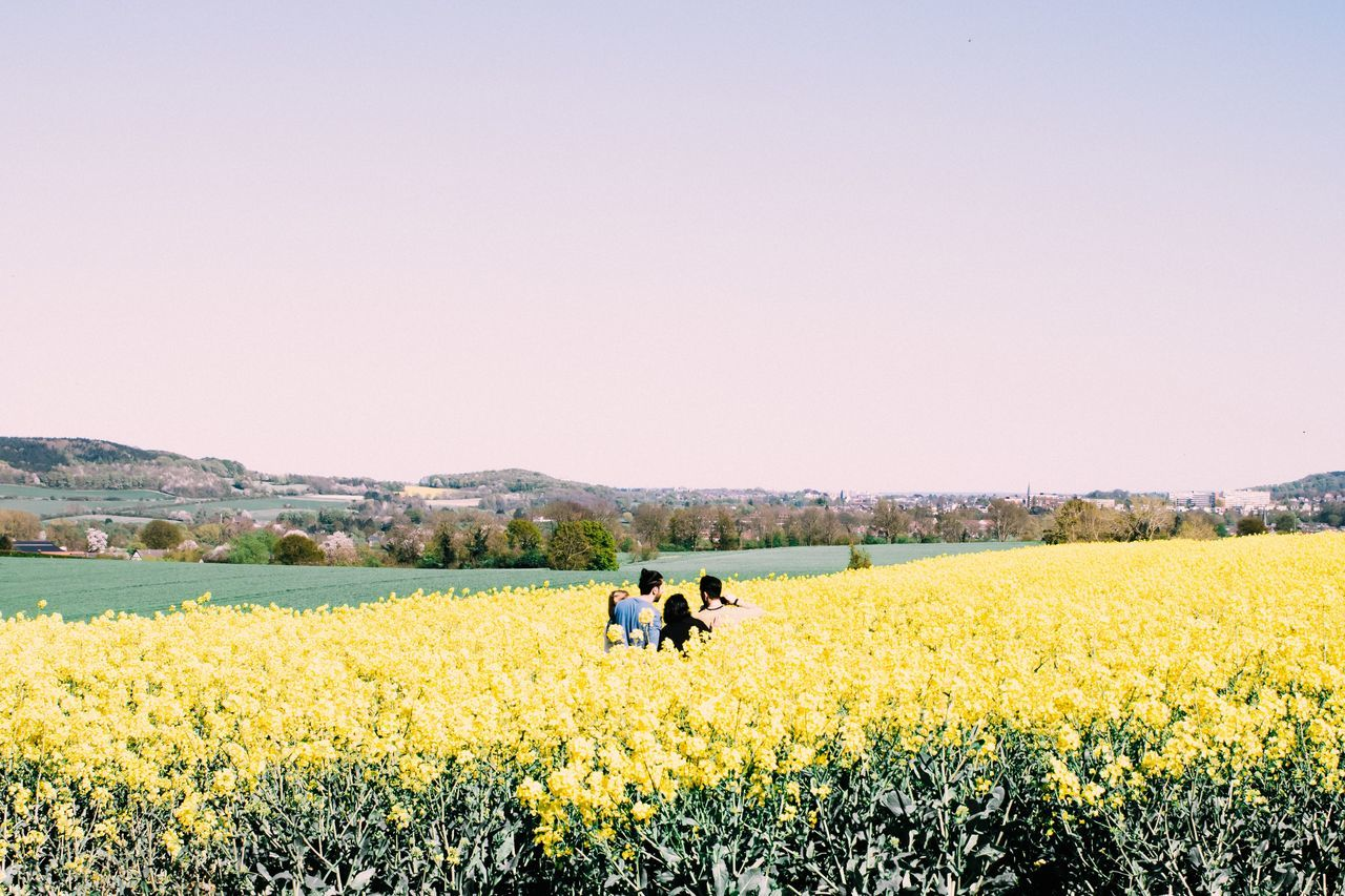 field, nature, flower, clear sky, agriculture, beauty in nature, real people, copy space, growth, yellow, landscape, tranquil scene, scenics, day, rural scene, tranquility, outdoors, oilseed rape, men, plant, two people, women, sky, tree, freshness, mammal, people