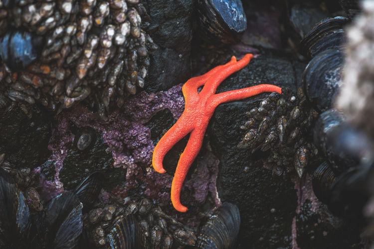 Close-up of starfish