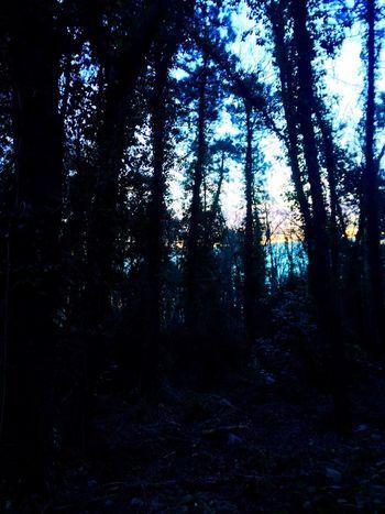 Forest Forestwalk IPhoneography Passeggiando Beautiful Nature Nature Enjoying Life Trees