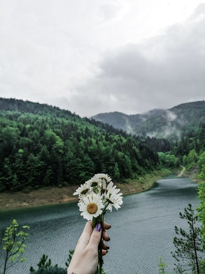 Person holding flowering plant against mountain