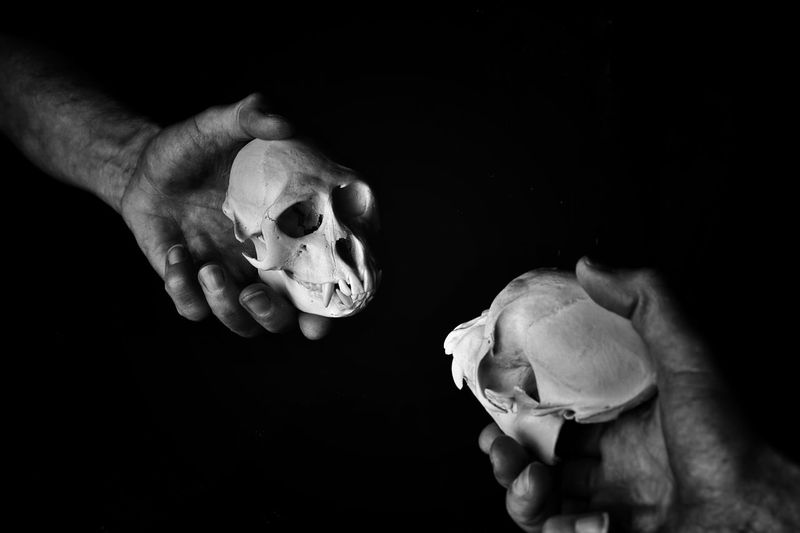 don't I know you from somewhere..... darkness and light darkness and light Primate Bone  Family Ties Anthropology Close Up Black And White Photography Black And White Reflections Simian Skull Simian Hand Human Hand Human Body Part Holding People Indoors  A New Perspective On Life Black Background Bone  Skull A New Perspective On Life