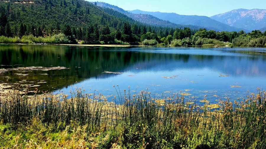 Ultimate Reflection Reflections Meditation Countryside Symmetry Fragility Grasses Peaceful Copy Space Background Shadow Rural Simple Pattern Zen Sky Landscape Mountain Water Lake The Week On EyeEm Purple Blue Soft Tranquility Perspectives On Nature EyeEm Ready   California Dreamin