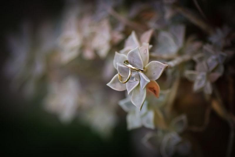 Argentina Bokeh Botany Close-up Depth Of Field Flower Fragility Garden Gold Partnerships Petal Selective Focus Springtime Wedding Wedding Photography
