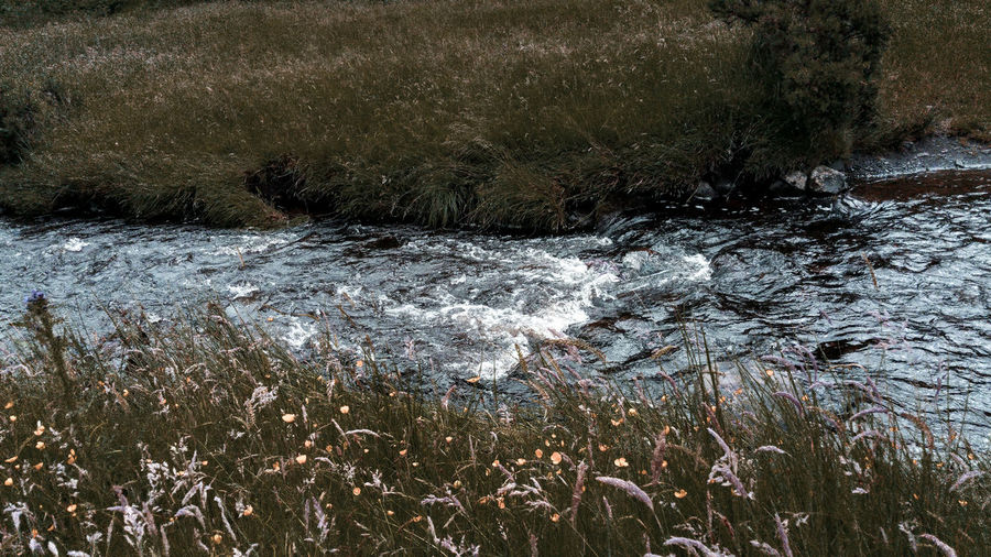 small river Stream River Riverside Grass Otherworldly Turquoise Turquoise Water Wildflowers Countryside Nature Water Backgrounds Full Frame Close-up Rushing Shore Grassland Grass Area Calm