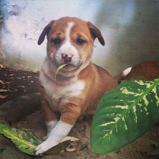 Badshah ! the notorious. Js Jashimsalam Photographer Documentary Photojournalism Dailylife Pet Puppy Dog Play Instagram Light Beautiful Home Chottogram Chittagong