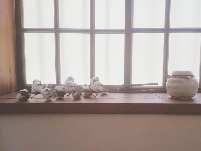 Cotton Plants On Window Sill