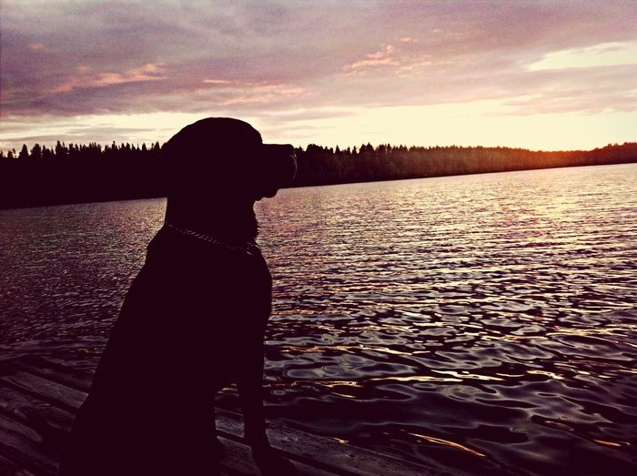My rottweiler Eddie Rocker ❤ Rottweiler Enjoying Life ️ First Eyeem Photo