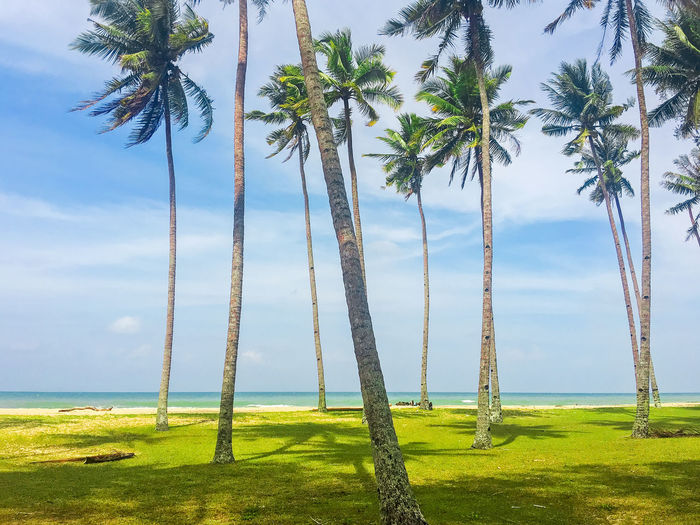 Palm and tropical beach. Beautiful nature landscape with Coconut Palm trees ASIA Asian  Beach Photography Beautiful Nature Palm Tree Terengganu, Malaysia Beauty In Nature Cloud - Sky Coconut Trees Day Grass Green Color Growth Nature No People Outdoors Palm Tree Rope Swing Scenics Sky Tranquility Tree Tree Trunk Village Water