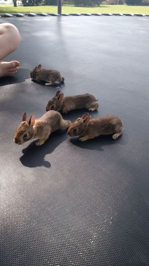 Low Section Of Person Sitting By Rabbits On Trampoline