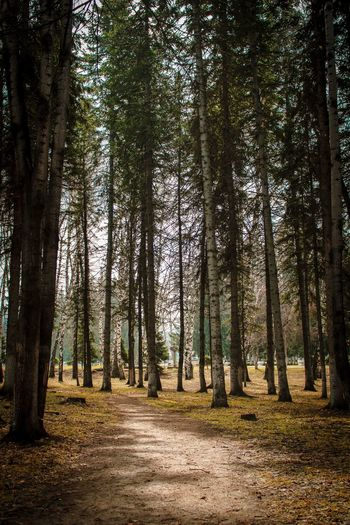 Nature Siberia Altay Altai Mountains Tree Area